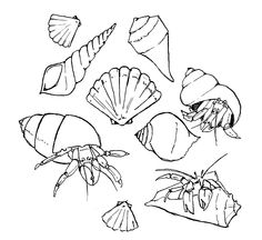 Pictures Of Hermit Crabs To Color