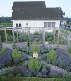 Boxwood & lavender - can easily substitute salvia or nepata and have the same look