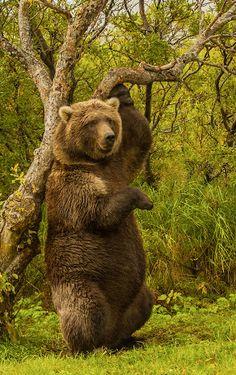 big bear pose