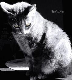 Noctali Photographe : Sadana Silhol Cats, Animals, Photography, Gatos, Animais, Animales, Animaux, Animal, Kitty