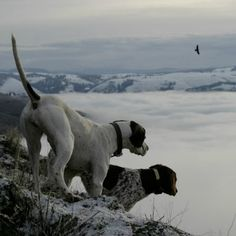 Flying B Ranch's legendary hunting dogs on the ridge lines overlooking a foggy Lawyer's Canyon.
