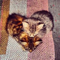 kitten heart!!!