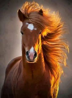 This horse is absolutely working it's hair