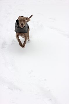 Bourne Park in the Snow by Cormac Scanlan #photography #minimal #minimalism #dog #snow