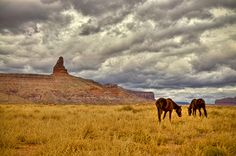 Horses Grazing in the Mountains of Glacier National Park Montana Panoramic by John Tarr Photography Visual Adventurer Preston, Glacier National Park Montana, Wild Mustangs, Dynamic Range, Wild Horses, Monument Valley, Photo Art, National Parks, Landscapes