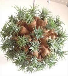 Sputnik style air plant container made from champagne corks.  Impressive!