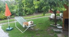 This Dog Who Just Doesn't Get Hammocks. More photos of cute and funny puppies, visit http://pewpaw.com/