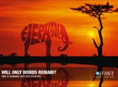 Will only words remain? - IFAW