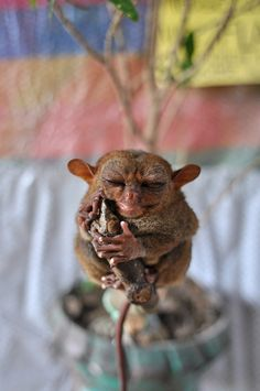 Master Yoda by enggul, via Flickr