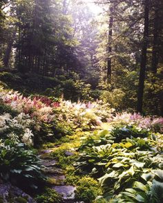 Astilbes, lush hostas, and creeping sedums star in this woodland garden in New York's Catskill Mountains.