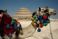 Camel in front of the pyramids by Flickr user Zalacain.