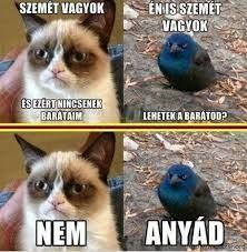 "Képtalálat a következőre: ""grumpy cat magyarul felirattal"" Grumpy Cat Breed, Grumpy Cat Meme, Cat Memes, Cat Ideas, Animals And Pets, Cute Animals, Cat Whisperer, F2 Savannah Cat, Cat Room"