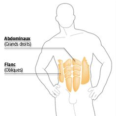 Exercices de musculation classés par zones du corps