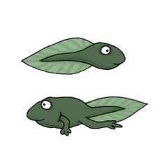 Tadpole Cartoon Check Out Find A Tadpole For A