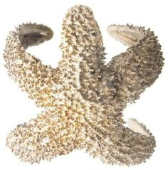 Alkemie Jewelry Starfish Cuff