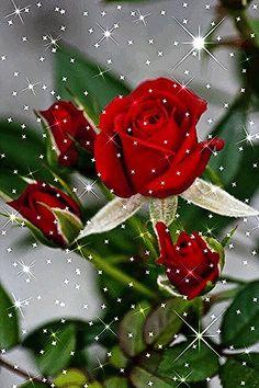 48218468 Pin de Татьяна О em Красивые розы