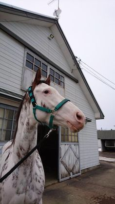 Horses And Dogs, Cute Horses, Horse Love, Beautiful Horses, Animals And Pets, Cute Animals, Horse Ears, Horse Photos, Gentle Giant