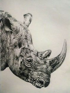 Moose Art, Drawings, Animals, Animales, Animaux, Sketches, Animal, Drawing, Animais