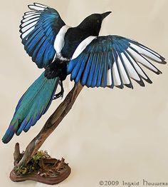 Taxidermy - Magpie by *Illahie on deviantART