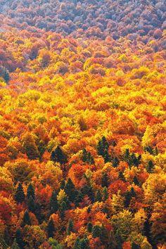 earthdaily:  Autumn Ocean by Evgeni Dinev