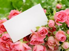 Photo Frame Wallpaper, Xmas Wallpaper, Rose Wallpaper, Beautiful Red Roses, Beautiful Flowers Wallpapers, Pretty Wallpapers, Flower Backgrounds, Wallpaper Backgrounds, Happy Birthday Drawings