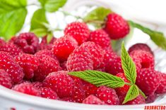 Raspberry is a summer berry that everyone likes to eat in any form. Raspberry fruits are very useful and very often used for any medicinal purposes, whether it' Raspberry Fruit, Raspberry Ketones, Strawberry, Blueberry Fruit, Juicy Fruit, Fresh Fruit, 1366x768 Hd, Growing Raspberries, Fruits Photos