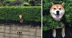 Quando você está preso em um arbusto mas vai ter que fingir até conseguir sair.