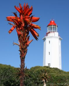 Danger Point Lighthouse - Gansbaai, South Africa