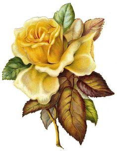 Antique Images: Free Printable Frame: Digital Frame Clip Art with Yellow Rose Vintage Rosen, Art Vintage, Vintage Images, Vintage Yellow, Victorian Flowers, Vintage Flowers, Art Floral, Floral Theme, Flower Images