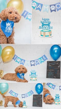 Jimmy Chew celebrates his doggie birthday with a cake smash Dog First Birthday, Puppy Birthday Parties, Puppy Party, Animal Birthday, Prince Birthday, Puppy Cake, Doggie Cake, 1st Birthday Pictures, Birthday Cake Smash