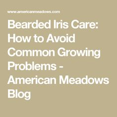 Bearded Iris Care:  How to Avoid Common Growing Problems  - American Meadows Blog