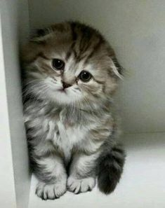 Cute Cats Captions Cute Kittens And Puppies Videos Cute Kittens, Cute Baby Cats, Kittens And Puppies, Cute Little Animals, Kittens Meowing, Bulldog Puppies, Fluffy Kittens, Kittens Cutest Baby, Ragdoll Kittens