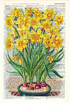 Wall art home decor . Narcisus Yellow flowers Book by PRRINT