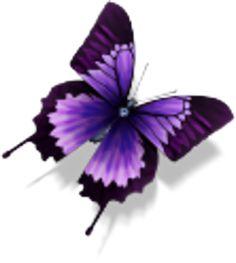 Purple Butterfly | Purple Butterfly