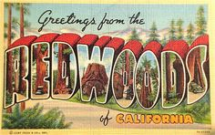 Greetings from the Redwoods of California postcard. by Smaddy, via Flickr