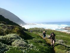 The Otter Trail is South Africa's best-known hiking trail, located in the Tsitsikamma forest of the Garden Route National Park, a place of great beaut Beaches In The World, Places Around The World, Mount Kenya, In Patagonia, Wale, Best Hikes, World Heritage Sites, Hiking Trails, South Africa