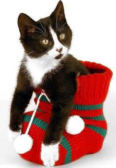 """""""The stockings were hung by the chimney with care, in hopes that St Nicholas soon would be there...."""" --Clement Clarke Moore"""