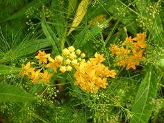 Тропические цветы - картинки для мобильного: http://wallpapic.ru/nature/tropical-flowers/wallpaper-10094
