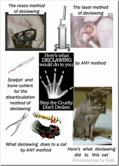 Declawing is animal cruelty!