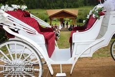 Carruagem para os noivos. #casamento #transporte #carrodosnoivos #carruagem #charrete #cavalos