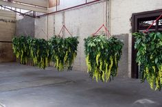 "CHICKEN COOPS, ""Measuring 1m wide and 1.5m long hanging baskets with artificial greenery"", creative by POD Point Of Difference, pinned by Ton van der Veer"