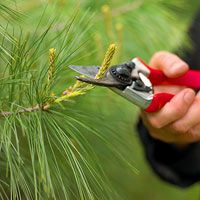 Tree and Shrub Maintenance Calendar -- A good guide to sprucing up now.