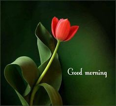 Good Morning Flower morning good morning morning quotes good morning quotes morning quote good morning quote beautiful good morning quotes good morning wishes good morning quotes for family and friends Good Morning Flowers Quotes, Good Morning Beautiful Pictures, Good Morning Picture, Morning Pictures, Morning Wishes For Her, Good Morning Messages, Morning Morning, Good Night Gif, Good Night Wishes