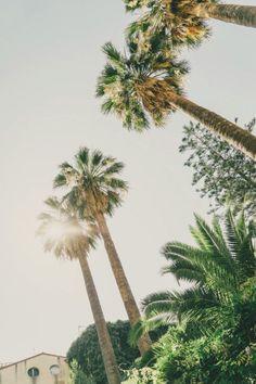 \\ california vibes //