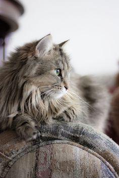 Sharp thinking cat