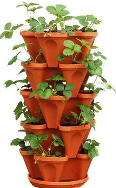 A PVC strawberry tower is an innovative way to grow lots of strawberry plants on a small plot of ground. Care to give it a try? Click in for complete instructions.