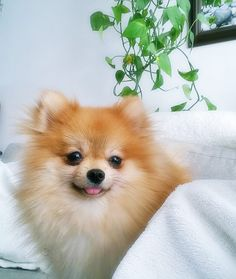 Love the little dog..