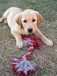 Playing with rope toy