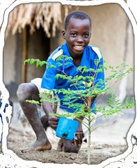 moringa tree planting and growing instructions... Also known as the drumstick tree or miracle tree