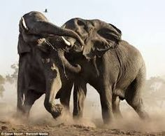 animals in the wild - Google Search